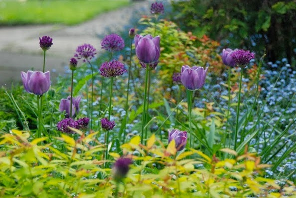 Tulipanes y alliums
