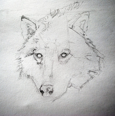 Sparrow-Avenue: Wolf Drawing Part 1