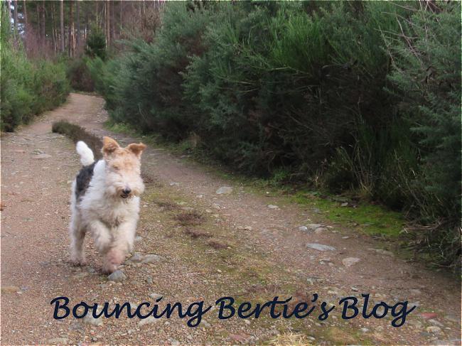 Bouncing Bertie's Blog