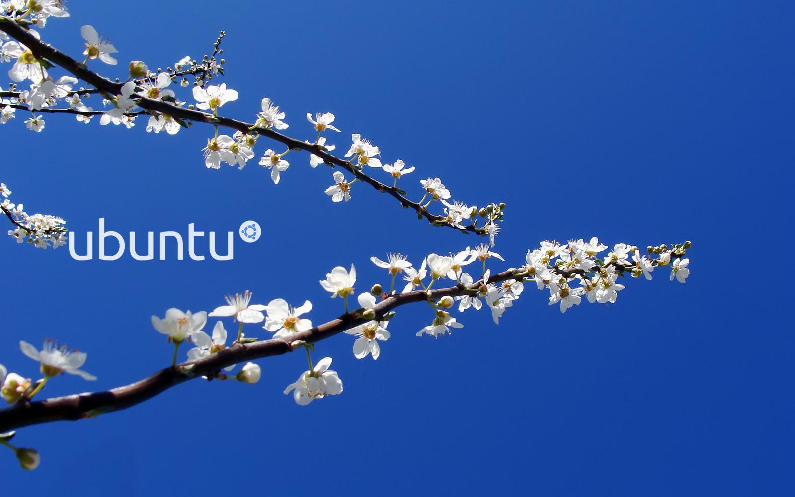 Ubuntu Blue Wallpaper