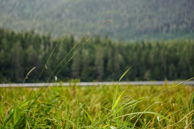 Ward-Lake-Ketchikan-Alaska