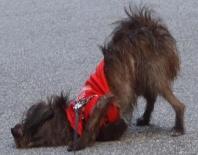 dog wisdom by dearmissmermaid.com