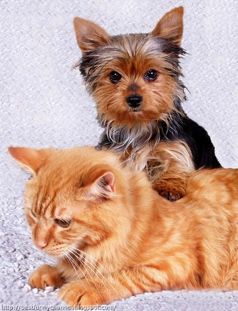Cute cat and dog.