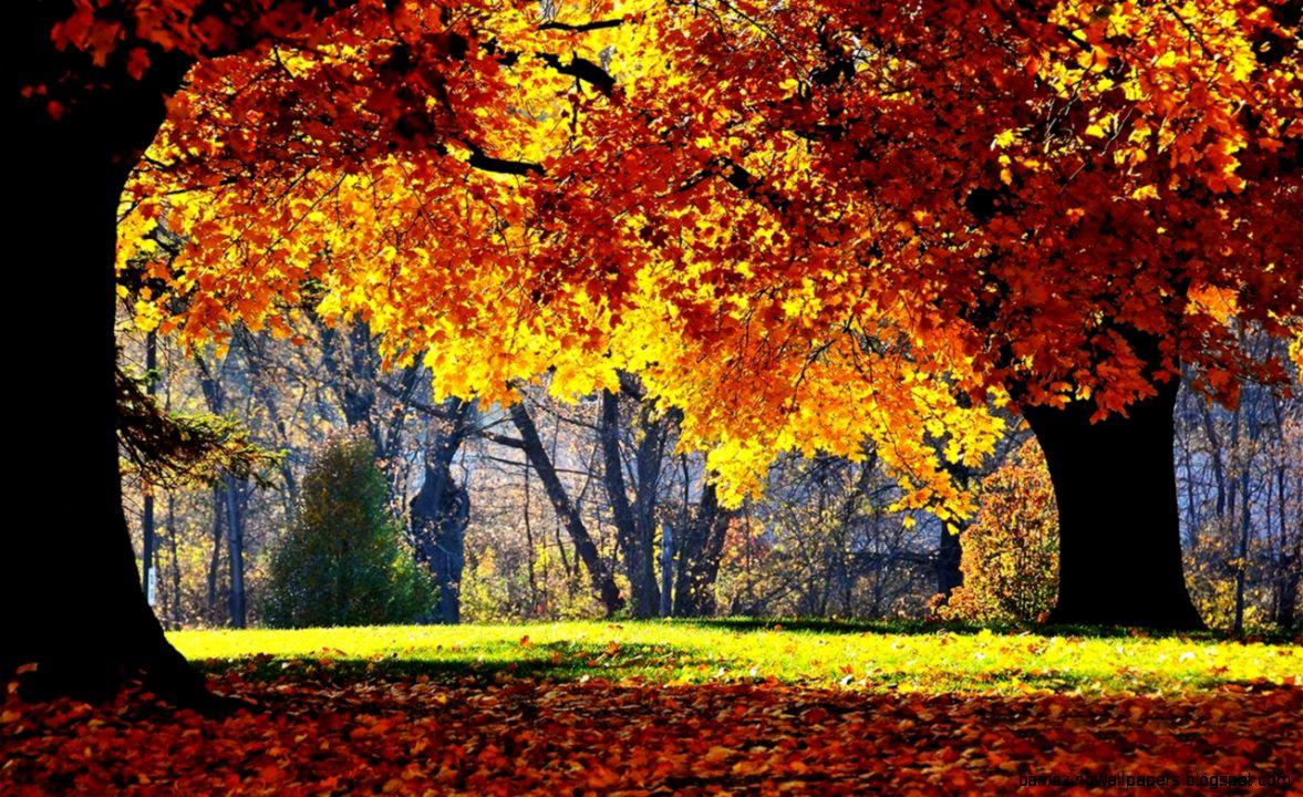 beautiful fall landscape photography