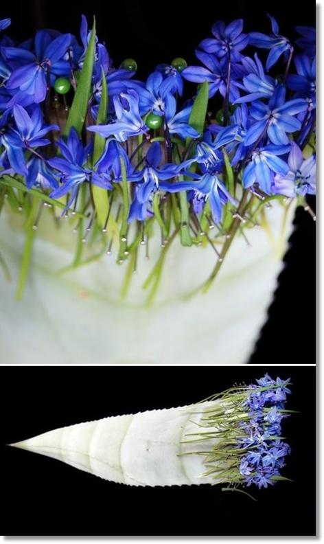 blomsterdesign, scilla