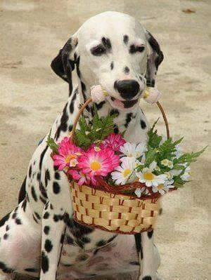 cute puppy holding a flower bucket