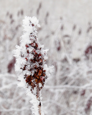 Frozen Berries Photograph