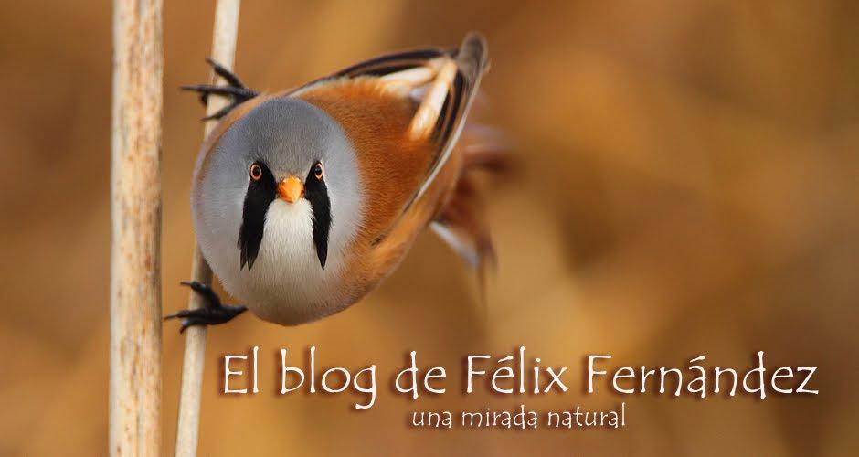 El blog de Félix Fernandez. Una mirada natural