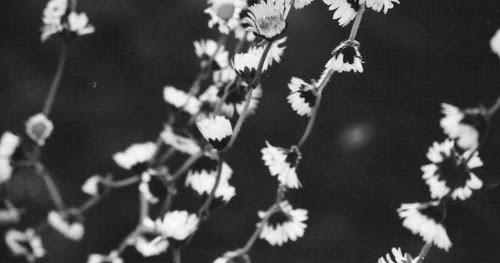 1968, Meditation and Obstinate Faith: A Litany of Daisy Chains for Dear Prudence