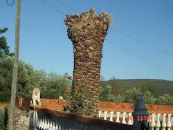 Palmeira do Firmino
