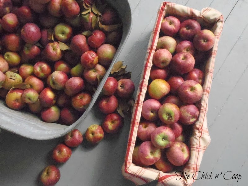 The Chick n' Coop: Easy Edible Fall Decor