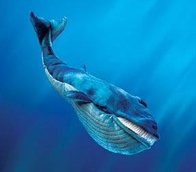 Ikan Paus Raksasa - M Agus Daniawan