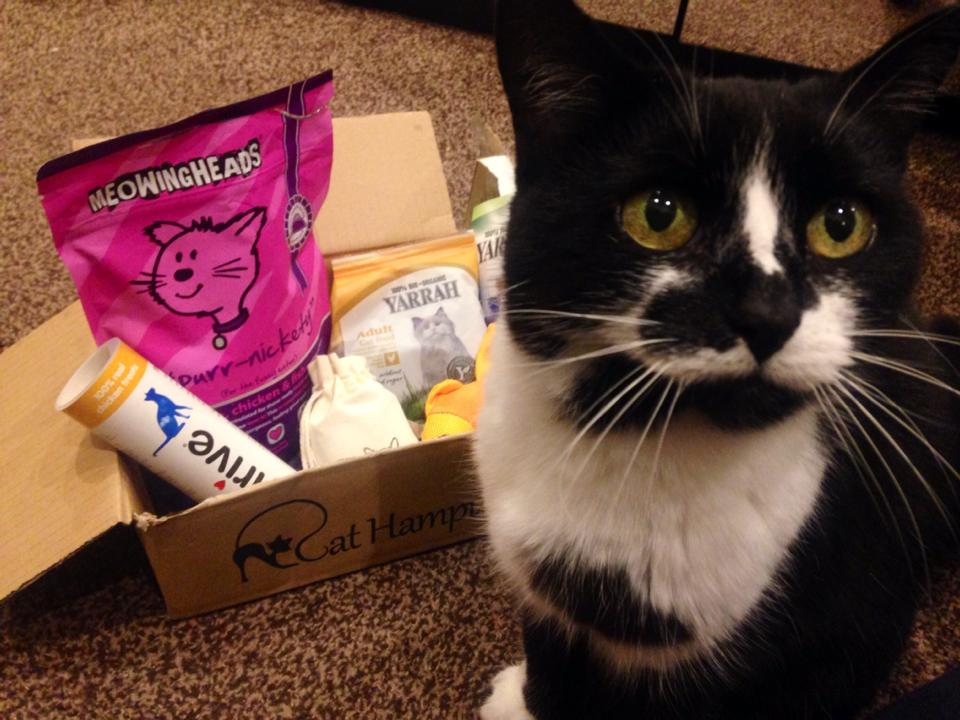 Cat Hampurr - The Subscription Box for you Cat! Subscription Box for Cats