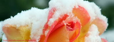 Photo de couverture journal facebook rose neige 2