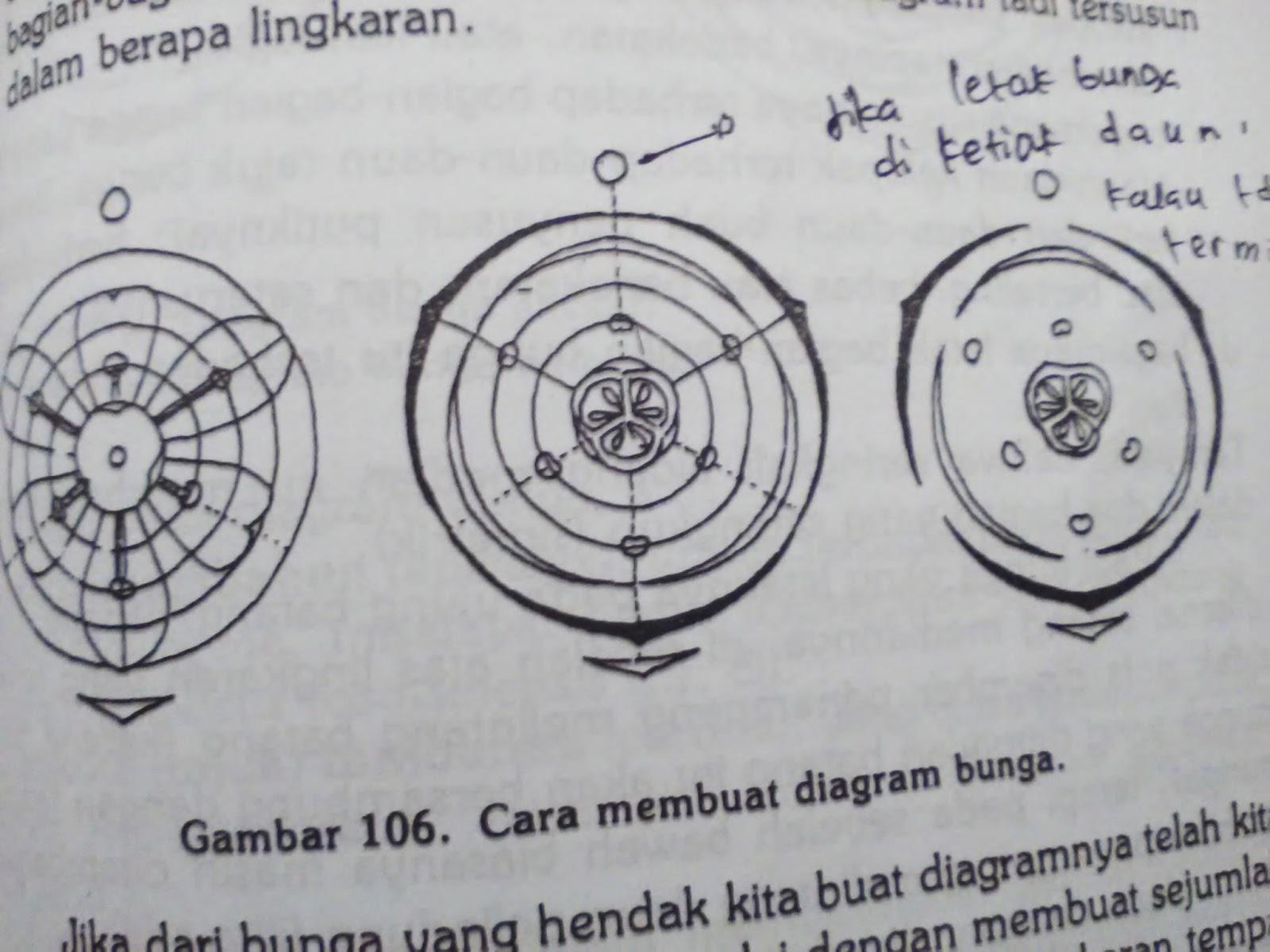 Morfologi tumbuhan jika dari bunga yang hendak kita buat diagramnya telah kita tentukan kedua hal tersebut kita mulai dengan membuat sejumlah lingkaran yang konsentris ccuart Image collections