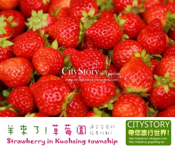 【南投縣●國姓鄉●草莓季】羊來了,草莓!我們採莓去