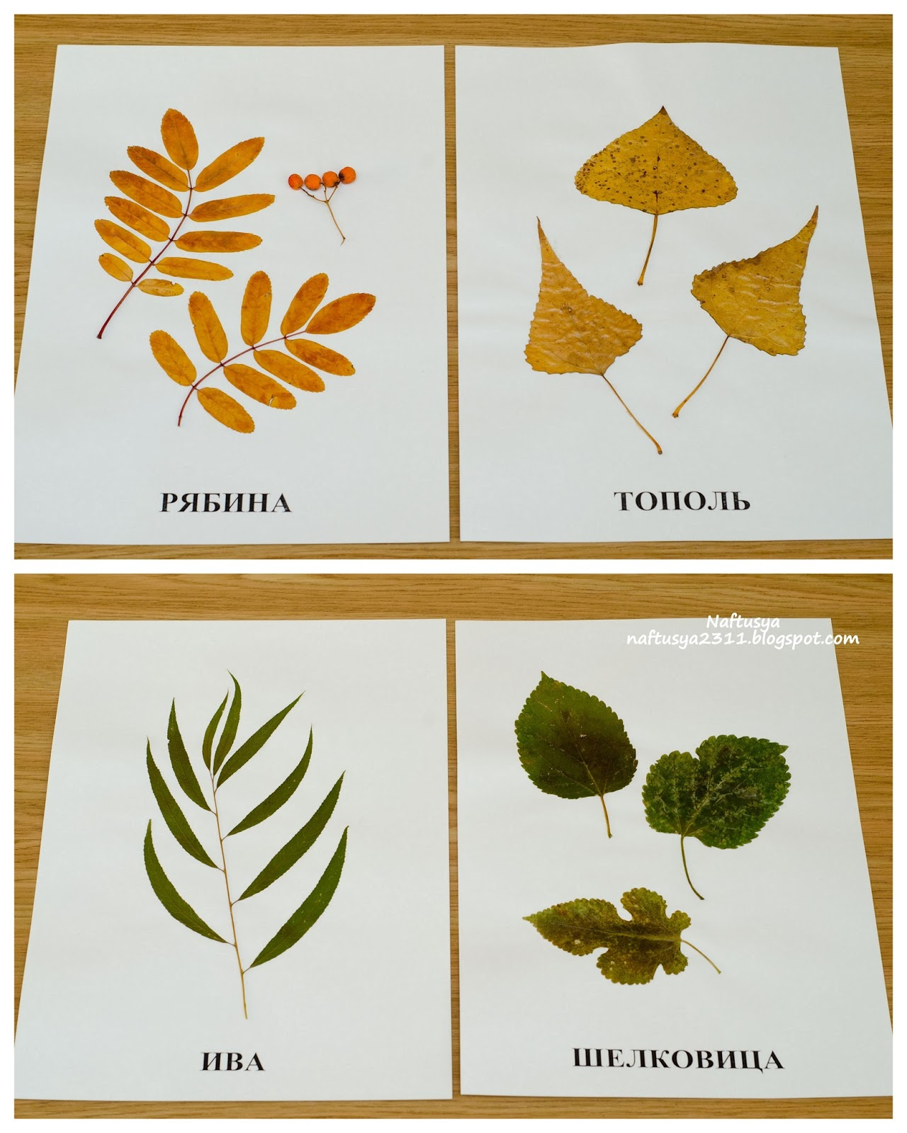 Как сделать гербарий для садика