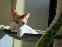 Kira nata il 30/3/2012