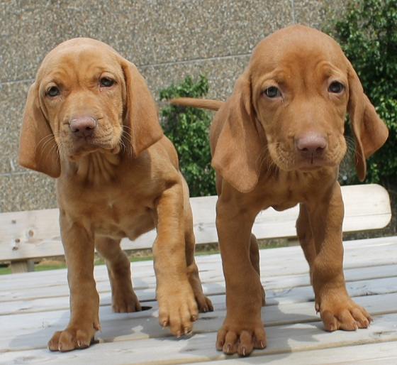 Puppy List Pictures