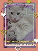 A tejer un gatito organiza Deya