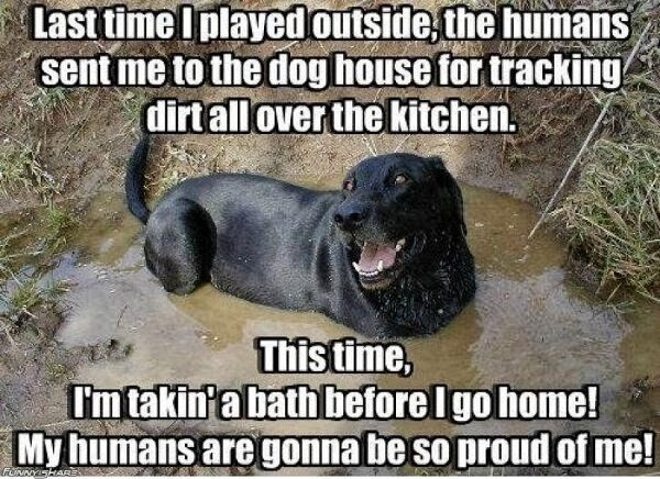 Funny animal captions - part 16 (30 pics), animal pics with captions, funny captions pics, animal captions, captioned animal pictures