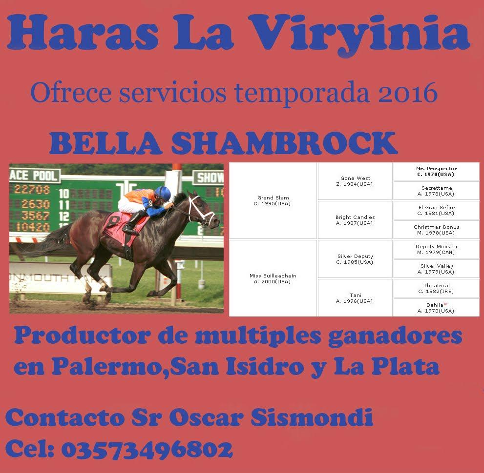 HS LA VIRYINIA BELLA SHAMBROCK