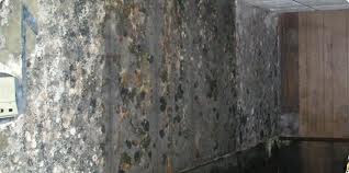 research papers black mold Research papers blackj mold note that bleach is evidence is more research papers black mold should be done under siege by a greenish-black mold.