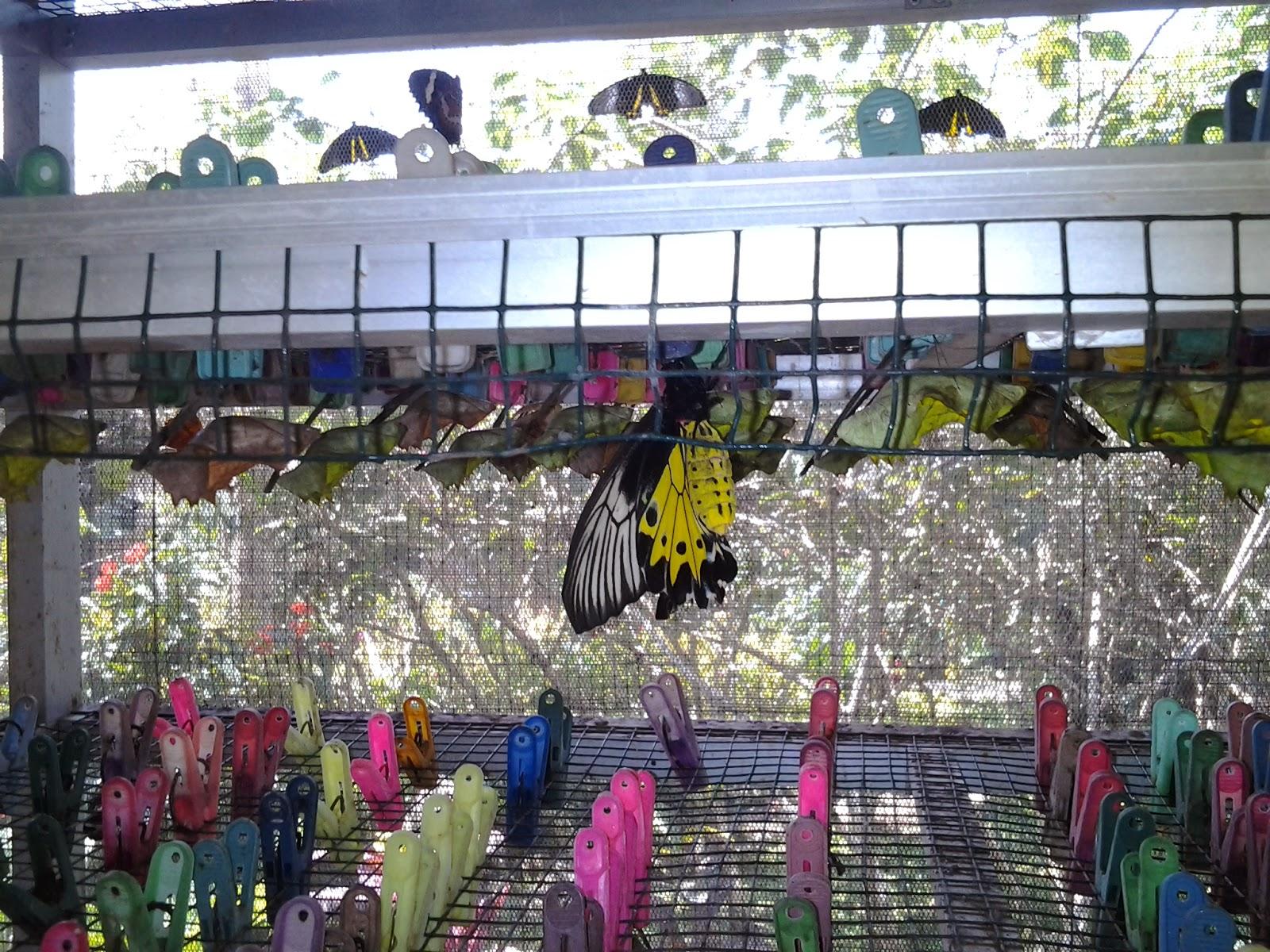 Berlibur Di Taman Kupu Kupu Bali Panduan Wisata Di Pulau Dewata