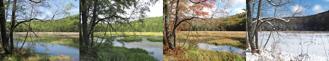 Swamp Four Seasons