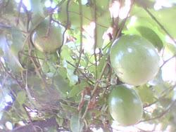 No quintal de casa