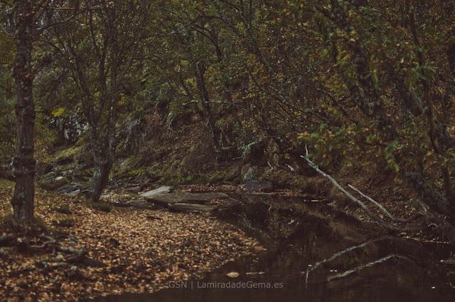 Otoño, la estación para perderse entre las hojas secas