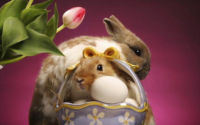 Best Jungle Life rabbits, basket, eggs