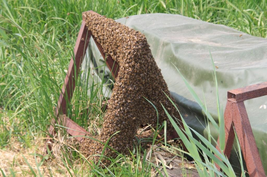 Bijensteek pijn
