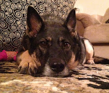 Macy's furry sister Bela (Bayla)
