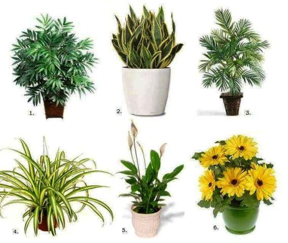 La mera verda plantas que purifican el aire for Plantas de aire