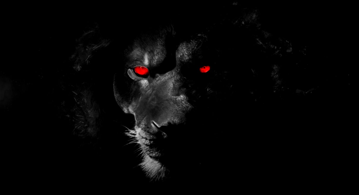 black lion wallpaper free hd wallpapers