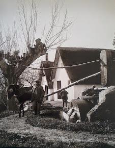 Barraca 1950.