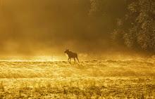 Magisk morgon i oktober,,