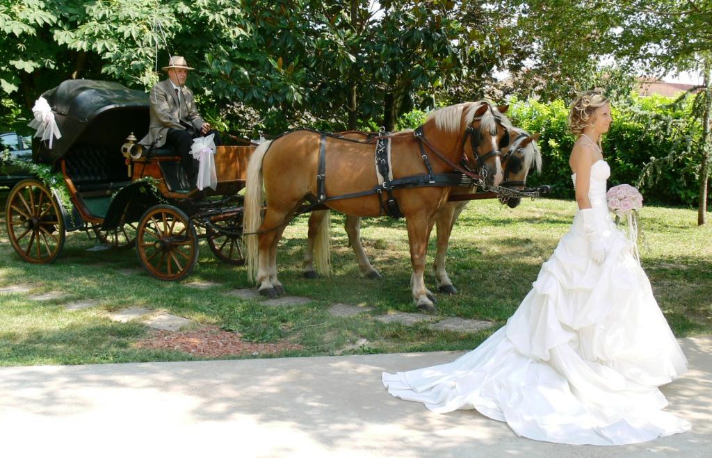 Matrimonio In Carrozza : Carrozze e cavalli verona vicenza matrimonio in carrozza
