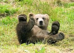 Танцуващи мечки парк Белица мечета
