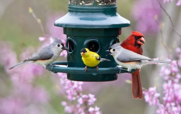 Bird Replacement Parts : Wild birds unlimited how to get replacement parts for