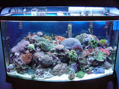 Lighting and Temperatures for Saltwater Tanks