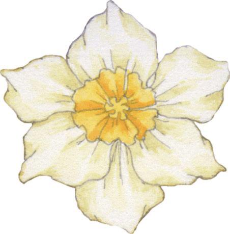 Dibujo de flor blanca