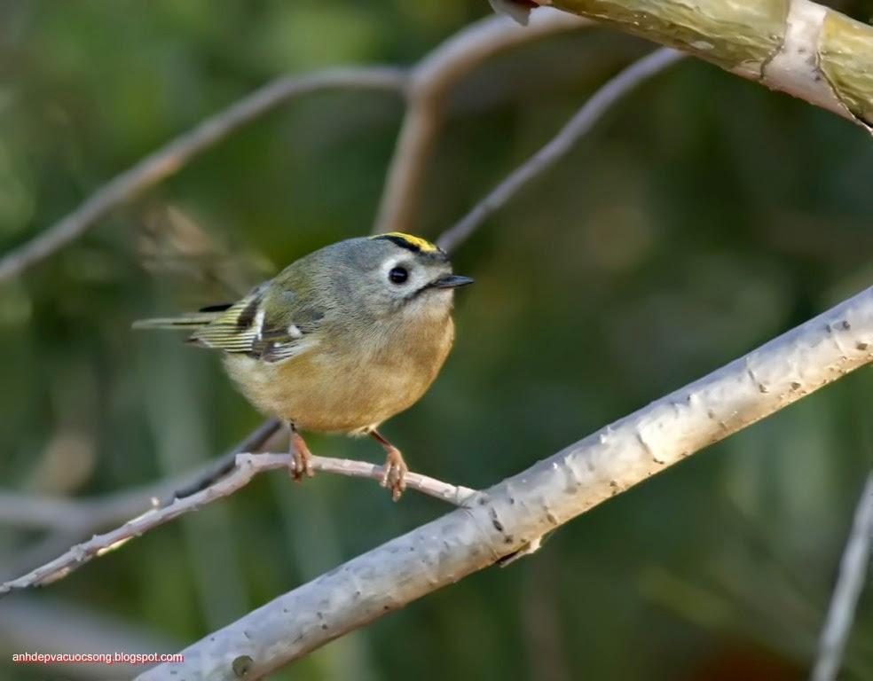 Ảnh thiên nhiên: Chú chim nhỏ 6