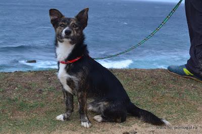 породы собак в Португалии
