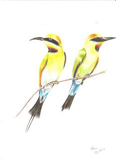 Dois pássaros (desenho)