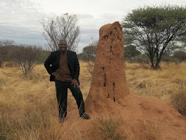 Massive ant hill in Namibia