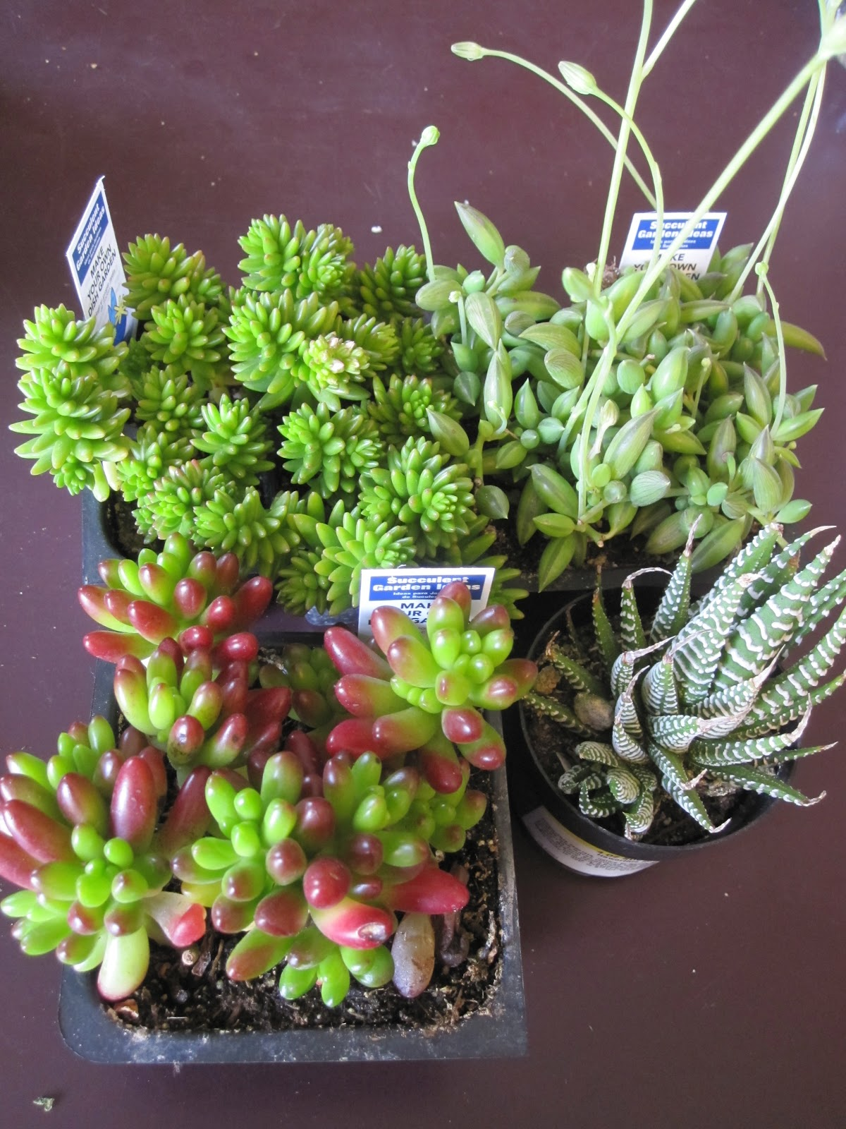 Beautifully contained fool proof indoor succulent garden for How to keep succulents alive indoors