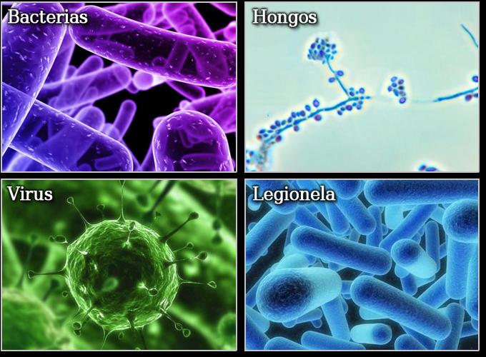 Mapihmsaludoral infeccion - Tipos de hongos en la pared ...