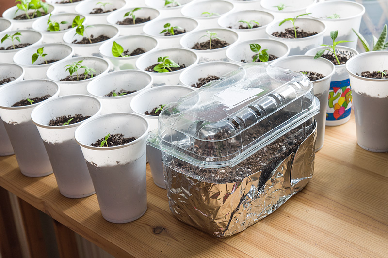 Improviziran mini rastlinjak DIY mini home garden on sun